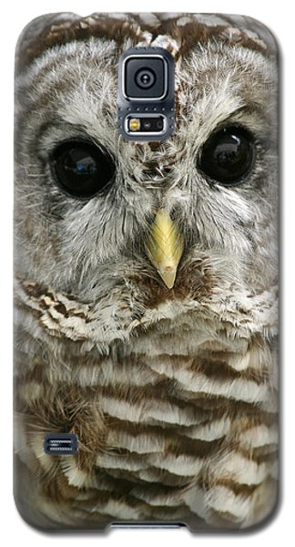 Barred Owl Galaxy S5 Case by Cindy Haggerty