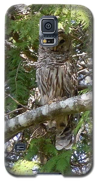 Galaxy S5 Case featuring the photograph Barred Owl  by Francine Frank