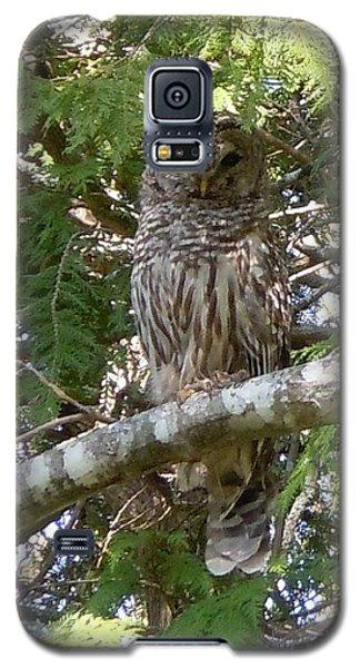 Barred Owl  Galaxy S5 Case by Francine Frank