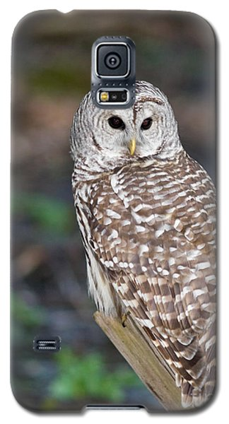 Galaxy S5 Case featuring the photograph Barred Owl by Les Palenik