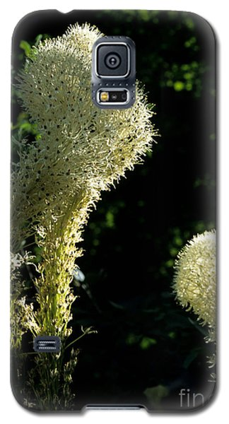 Galaxy S5 Case featuring the photograph Bear-grass I by Sharon Elliott