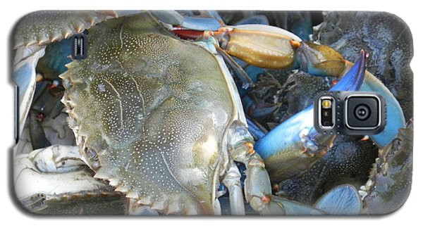 Galaxy S5 Case featuring the photograph Beaufort Blue Crabs by Patricia Greer