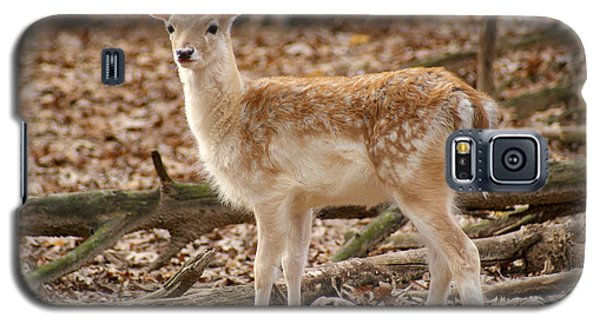 Galaxy S5 Case featuring the photograph Beautiful Fawn by Jean Haynes