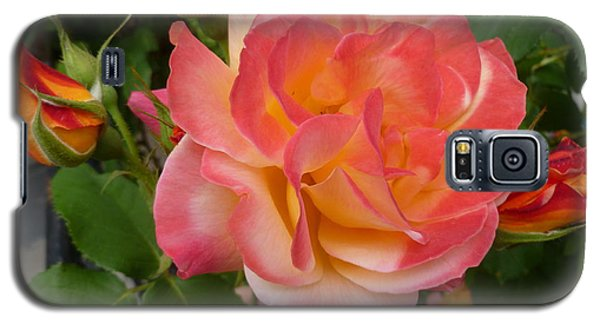 Galaxy S5 Case featuring the photograph Beautiful Rose With Buds by Lingfai Leung