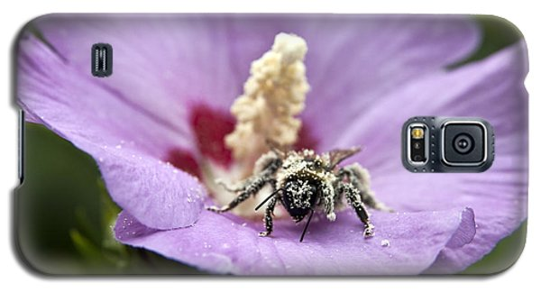 Bee Covered In Pollen  Galaxy S5 Case by Jeannette Hunt