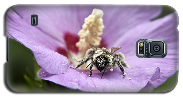 Bee Covered In Pollen  Galaxy S5 Case
