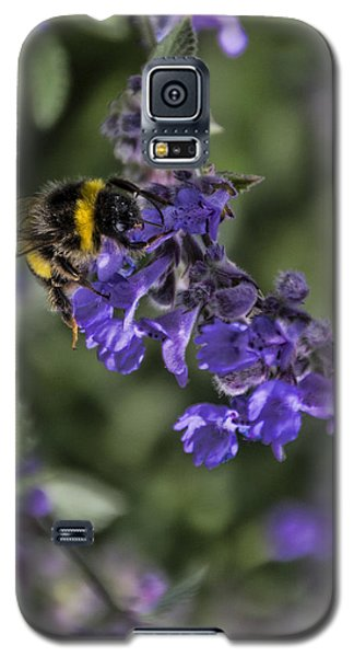 Galaxy S5 Case featuring the photograph Bee by David Gleeson