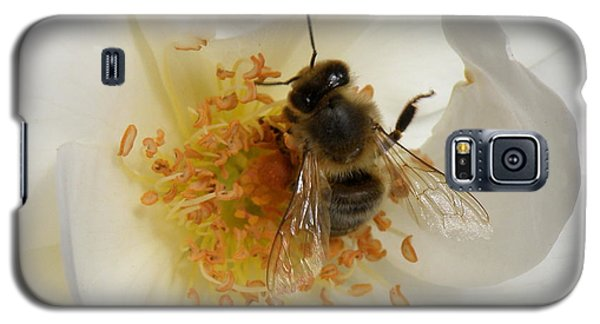 Galaxy S5 Case featuring the photograph Bee In A White Rose by Lainie Wrightson