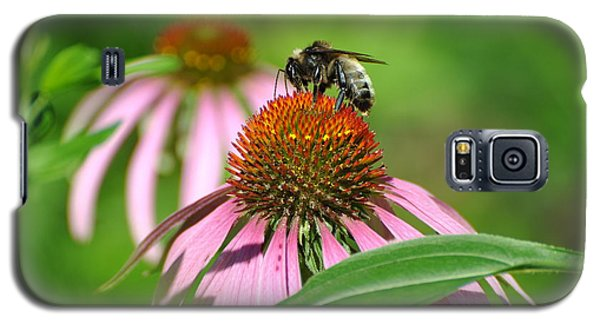 Bee On Pink Flower Galaxy S5 Case