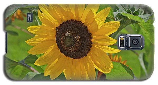 Bees And The Sun Galaxy S5 Case