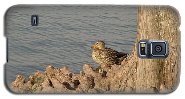 Bethany Lakes Duck Galaxy S5 Case by Jerry Bunger