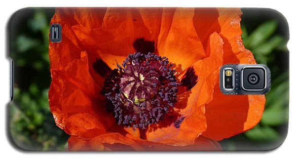 Galaxy S5 Case featuring the photograph Big Red Poppy by Lynn Bolt