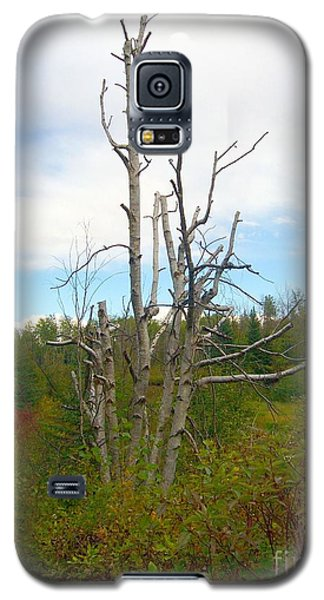 Galaxy S5 Case featuring the photograph Birch Tree by Jim Sauchyn