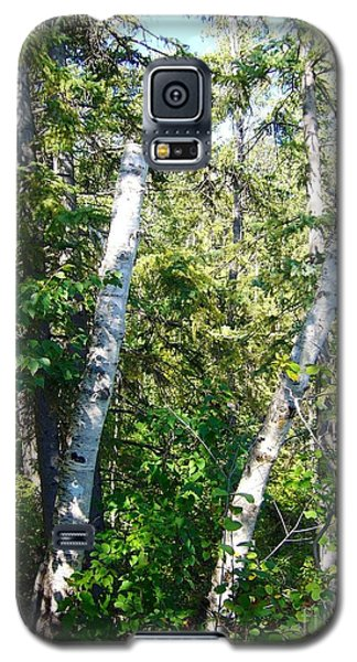 Galaxy S5 Case featuring the photograph Birch Trees by Jim Sauchyn