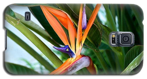 Galaxy S5 Case featuring the photograph Bird by Joseph Yarbrough