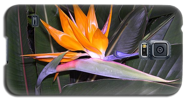 Galaxy S5 Case featuring the digital art Bird Of Paradise by Claude McCoy
