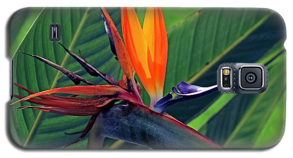 Galaxy S5 Case featuring the photograph Bird Of Paradise by Larry Nieland