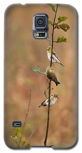 Bird Stack Galaxy S5 Case by Dan Wells
