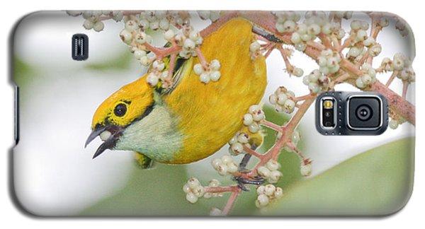 Bird With Berry Galaxy S5 Case