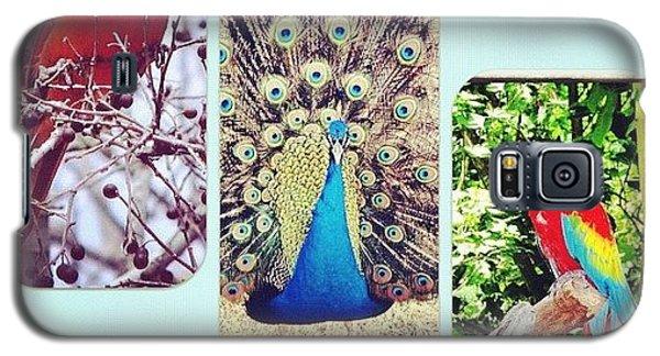 London2012 Galaxy S5 Case - Birds Around Houston by Arturo Jimenez