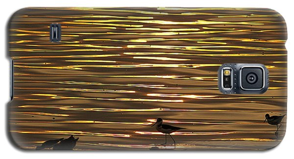 Galaxy S5 Case featuring the photograph Birds Walking In Gold Water Waves by John  Kolenberg