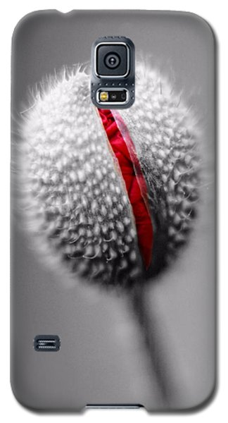 Birth Of A Poppy Galaxy S5 Case by Tracie Kaska