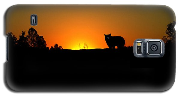 Black Bear Sunset Galaxy S5 Case