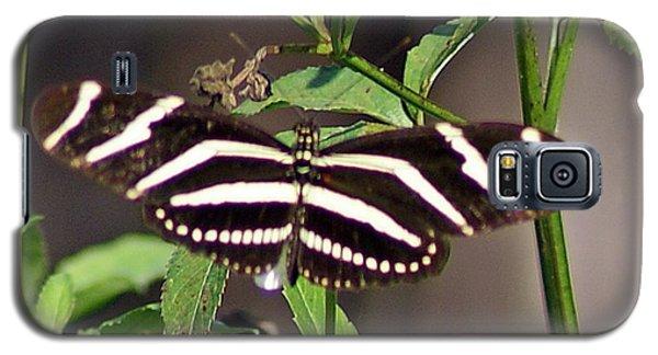 Black Butterfly Galaxy S5 Case by Joe Faherty
