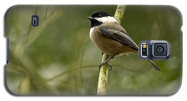 Black-capped Chickadee With Branch Bokeh Galaxy S5 Case