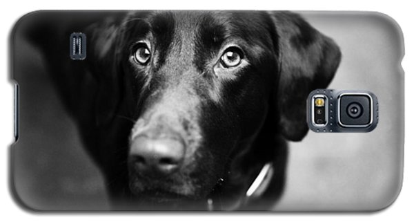 Black Labrador  Galaxy S5 Case by Sumit Mehndiratta