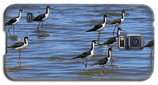 Galaxy S5 Case featuring the photograph Black-neck Stilt Dressed In Their Best by Roena King