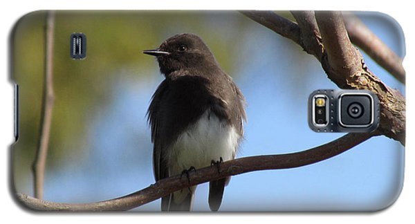 Galaxy S5 Case featuring the photograph Black Phoebe by Bonnie Muir