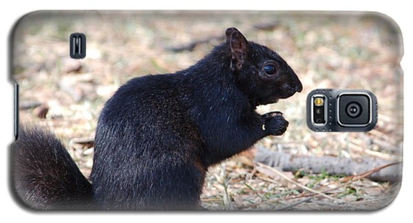 Galaxy S5 Case featuring the photograph Black Squirrel Of Central Park by Sarah McKoy