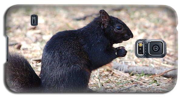 Black Squirrel Of Central Park Galaxy S5 Case