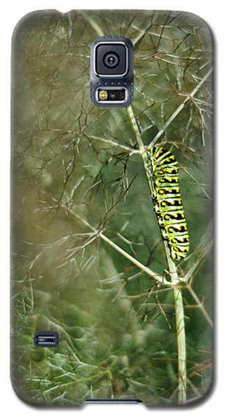 Black Swallowtail Butterfly Larva In Bronze Fennel Galaxy S5 Case