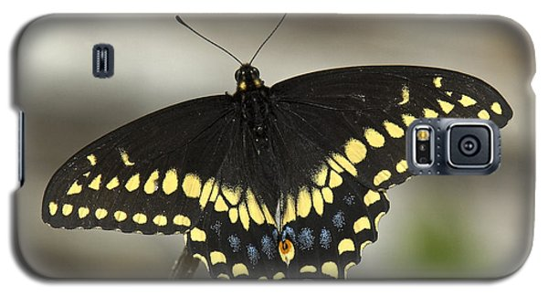 Black Swallowtail Din103 Galaxy S5 Case