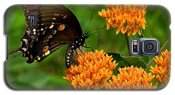 Black Swallowtail Visiting Butterfly Weed Din012 Galaxy S5 Case