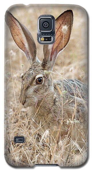 Galaxy S5 Case featuring the photograph Black-tailed Hare by Doug Herr