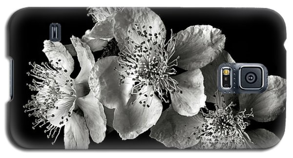 Blackberry Flowers In Black And White Galaxy S5 Case