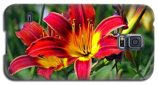 Blaze Tiger Lilies Galaxy S5 Case