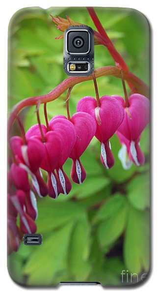 Galaxy S5 Case featuring the photograph Bleeding Heart  by Eva Kaufman