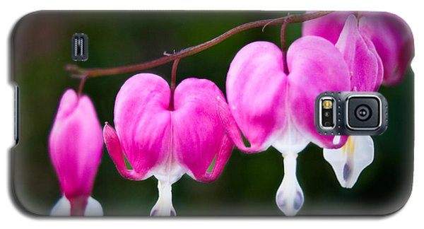 Bleeding Hearts 001 Galaxy S5 Case by Larry Carr