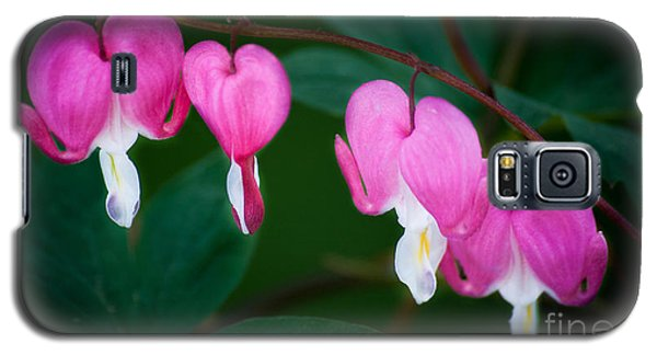 Bleeding Hearts 002 Galaxy S5 Case by Larry Carr