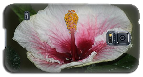 Blood Red Hibiscus  Galaxy S5 Case