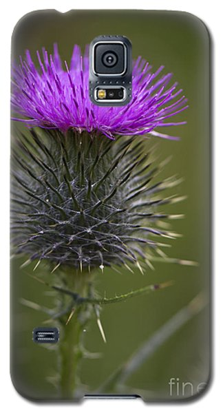 Blooming Thistle Galaxy S5 Case by Clare Bambers