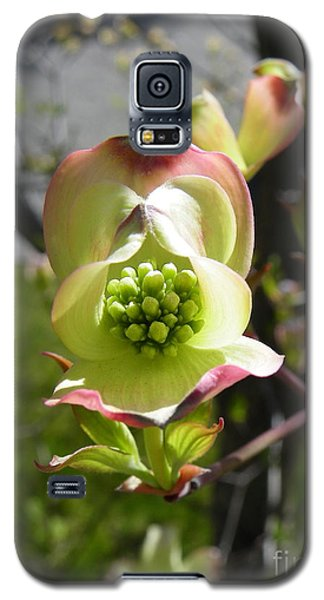 Blossoming Galaxy S5 Case
