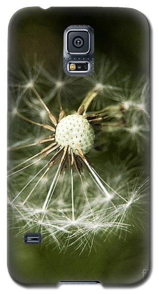 Blown Dandelion Galaxy S5 Case by Agnieszka Kubica