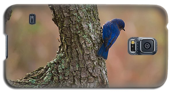 Blue Bird 2 Galaxy S5 Case by Dan Wells