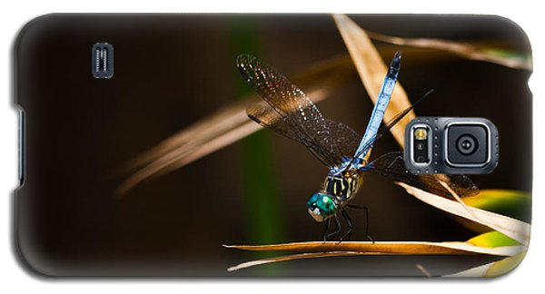 Blue Dasher Dragonfly Galaxy S5 Case