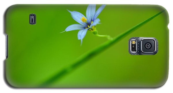 Galaxy S5 Case featuring the photograph Blue-eyed Grass by JD Grimes